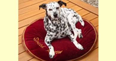 Dalmation Diesel adopted