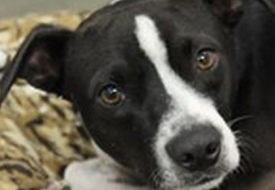 Adoptable Dogs and Cats